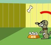 Kočka proti psovi